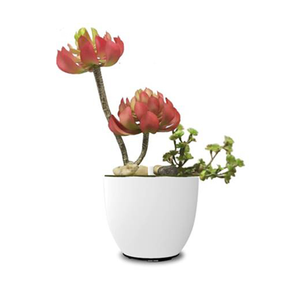 flor carnosa difusor de aroma natural de flores